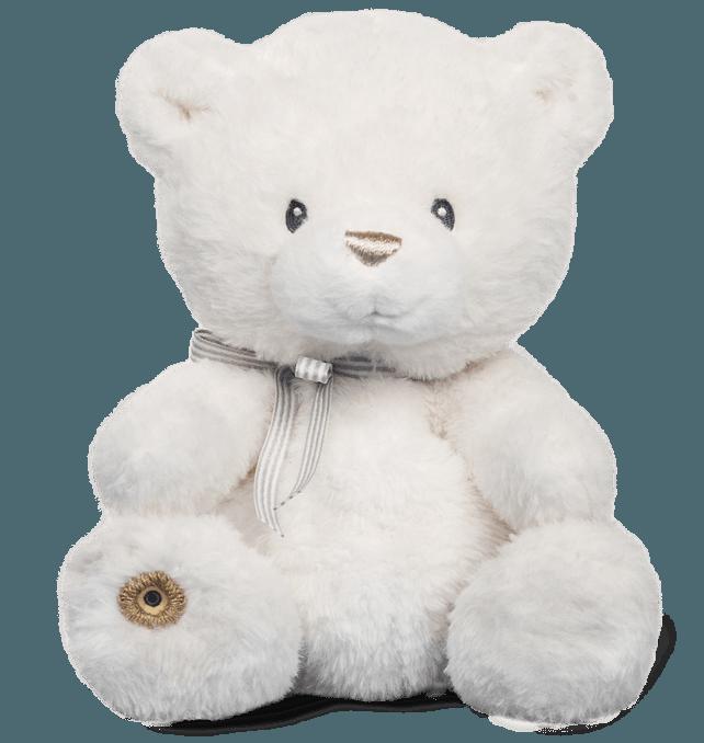 Teddy-landing-1